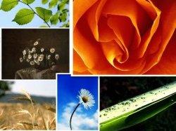 The beauty of flowers (Desktop4_ 2010)