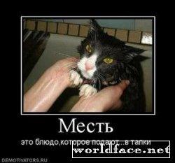 Демотиваторы: Коте - такие разные...