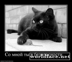 Демотиваторы: Коте - они такие милые...